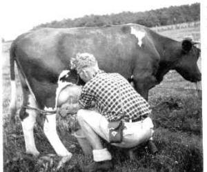 034 gast melkt koe 1940